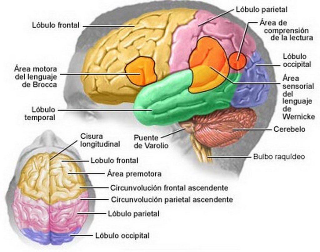 El Cannabis Medicinal puede tratar el Alzheimer de manera efectiva