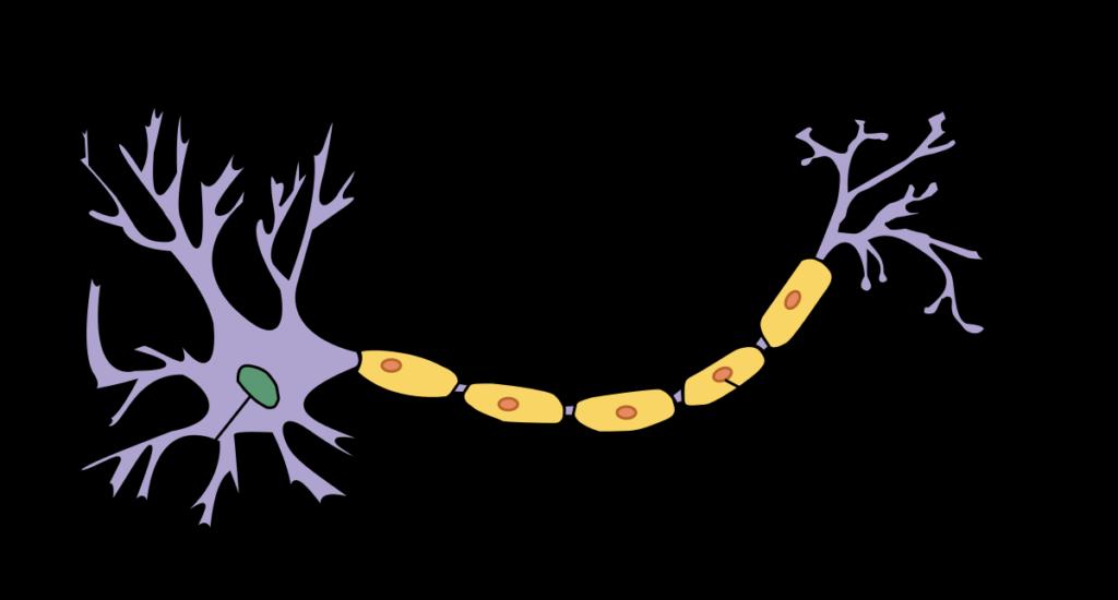 alzheimer-cannabis-cbd-cannabidiol-cannabity