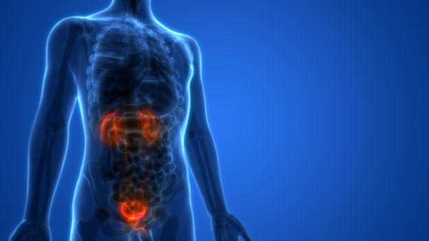 Cáncer de próstata y el Aceite de CBD