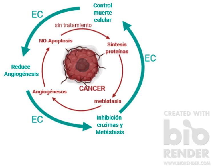 cannabis-medicinal-cancer-cbd-quimioterapia-cannabidiol-aceite-de-cbd-cannabity