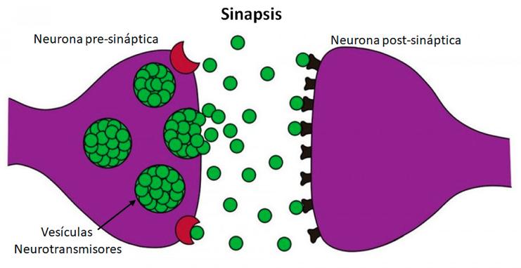 epilepsia-cannabis-medicinal-cbd-cannabity