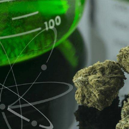Sociedad Española de Investigación sobre Cannabinoides