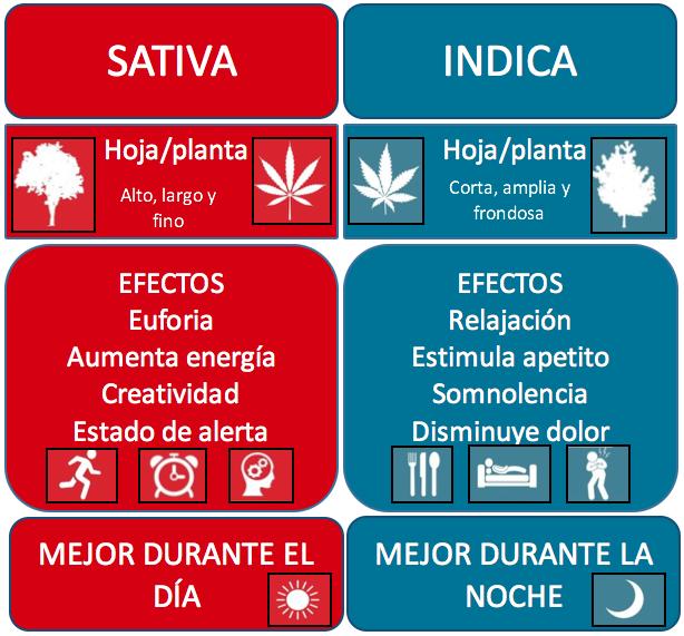 PLANTAS CON CBD Y SIN THC