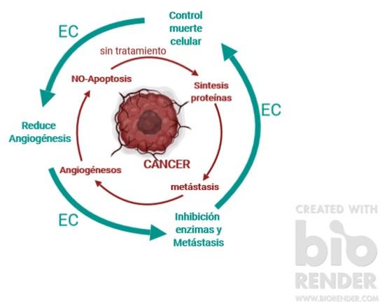 Effects of endocannabinoid (EC) treament on tumor cells