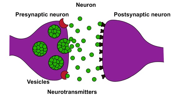 Cannabis and Epilepsy Schematic representation of the synapse